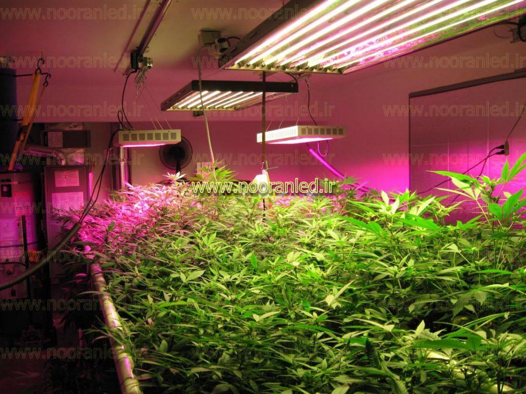 لامپ رشد گیاه (Grow Light) یا لامپ گیاه (Plant Light) توسط شرکت ها و برندهای مختلف و با مشخصات فنی و عملکردهای متفاوت، تولید شده و در بازار عرضه شده است.
