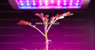 لامپ ال ای دی گیاهان