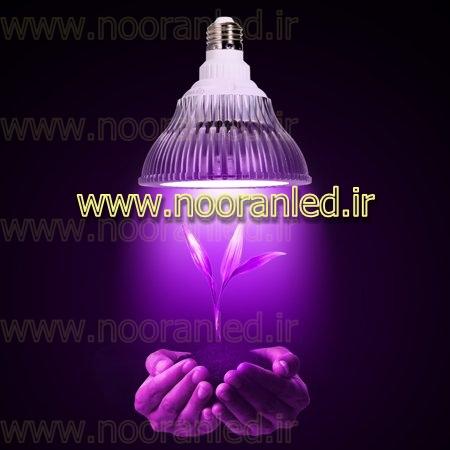 روشن کردن چندین ساعت لامپ کم مصرف برای رشد گیاه در روز به خوبی می تواند برای پرورش گیاهان موثر باشد. قیمت لامپ ال ای دی رشد گیاه در مدل های مختلف آن و با توجه به توان نوری ساطع شده، متفاوت می باشد.