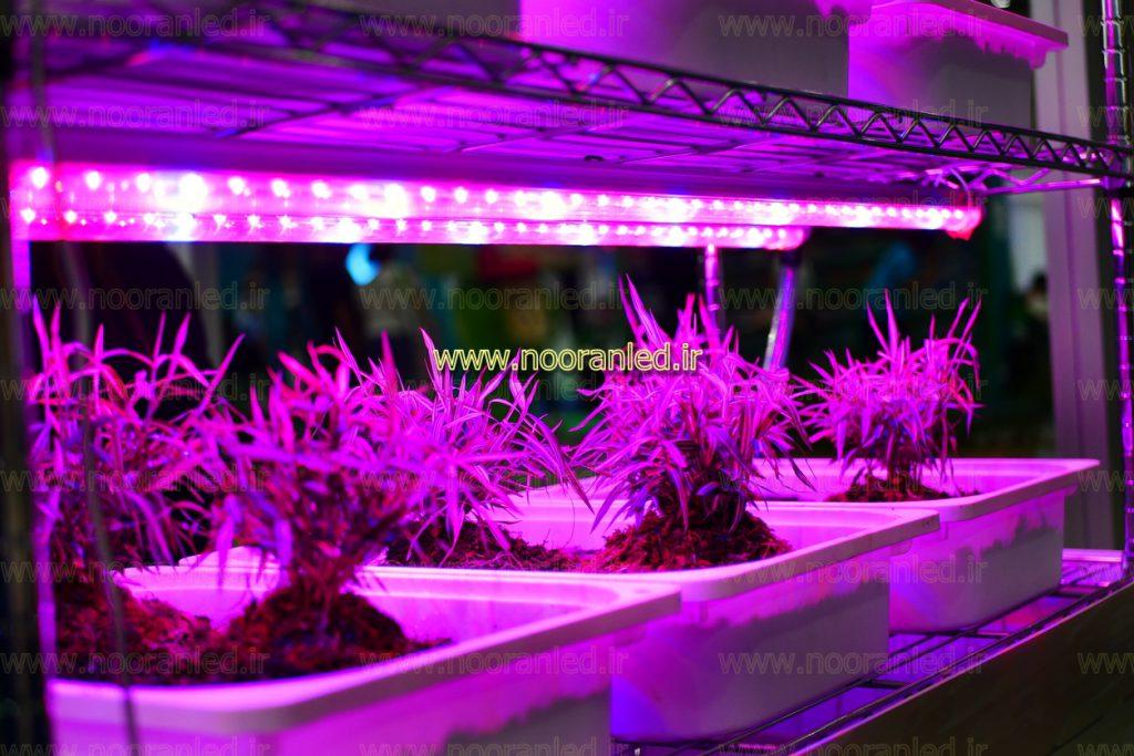 همچنین لازم به ذکر است که این دسته از لامپ های ال ای دی رشد گیاه، مضرات استفاده از ال ای دی های قرمز و آبی را که باعث شرطی شدن گیاه به دو نوع فرکانس می شود را، ندارند و دارای طیف نوری اصلاح شده هستند.