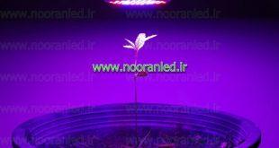 لامپ ال ای دی بنفش